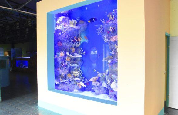 Parque marino del pac fico estrena nuevas peceras nicas for Accesorios para acuarios marinos